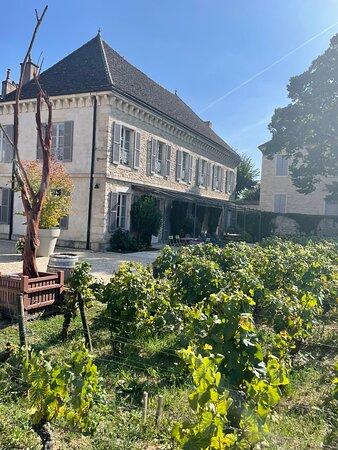 Private excursion to Côte de Beaune and Côte de Nuits (full day) Resmi