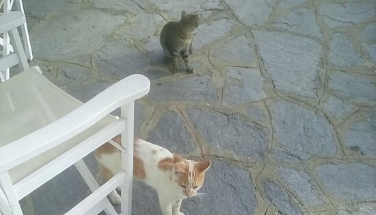Tinos, Grecia: First visitors!