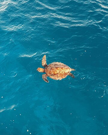 3 Day Whitsundays Sailing and Diving Adventure: Kiana Picture