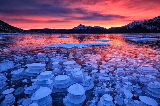 Lake Louise & Abraham Lake 1-Day Tour from Calgary or Banff