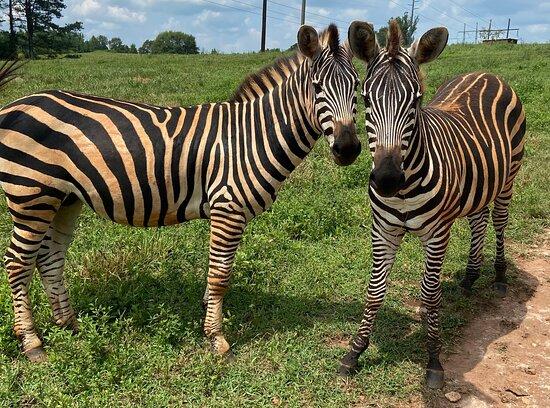 Iron P Homestead Exotic Petting Zoo