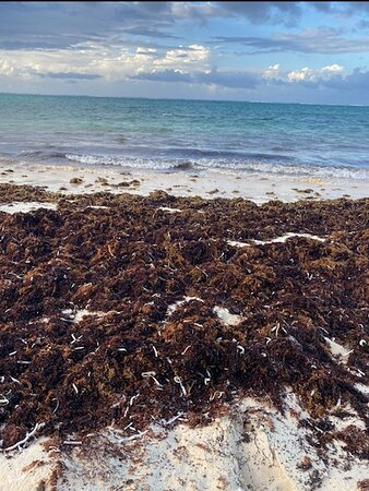 Rank seaweed.  Unavoidable since it was also churning in the surf.