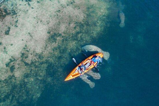 Manatee Kayak Encounter