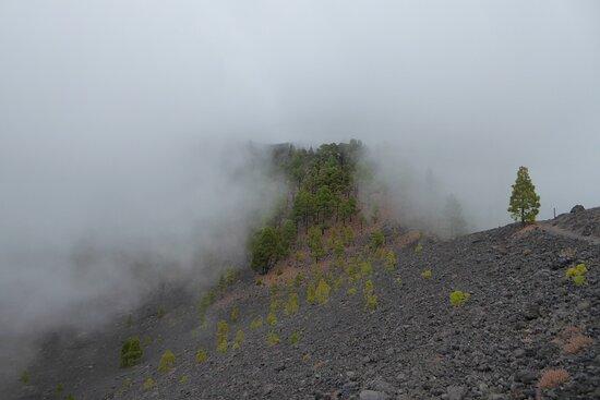 Paisaje entre la niebla