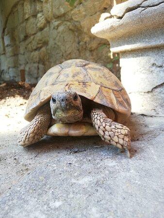 Penelope wohnt im Innenhof des Schlosses