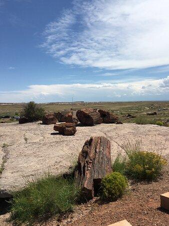 Giant logs loop