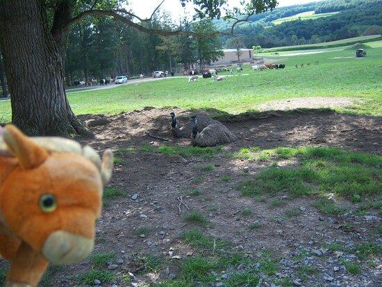 Jake watches emu's at Hidden Valley Animal Adventure