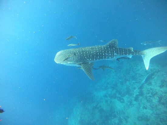 Amazing trip. We went to sail rock and saw whale shark in the first dive. Dive leads and staff are nice and friendly. Good accommodations at ban's. We stayed for 5 nights in pool villa. Really loved it!!