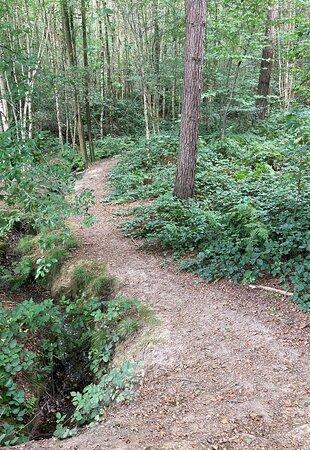 5.  Hemsted Forest, Benenden, Kent