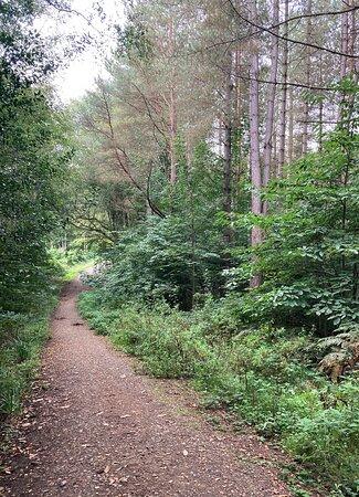 6.  Hemsted Forest, Benenden, Kent