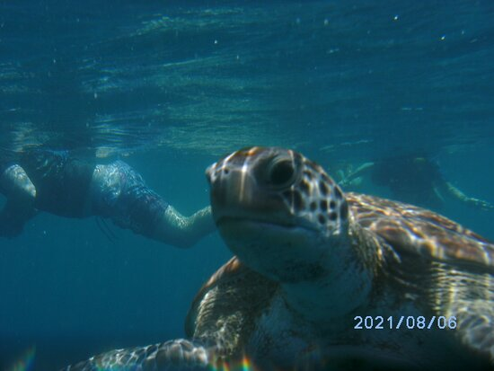 Glass bottom boat tour with Rod, fab snorkelling spots and impressive local knowledge!