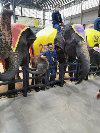 Elephants.