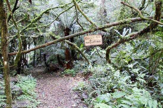 Foot of Cascata Explorer - By Brocker Turismo: A trilha entre montanhas, paredões de pedras, rio e uma natureza exuberante.