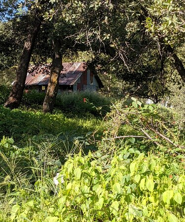 A rustic cabin on the Folklore Preserve