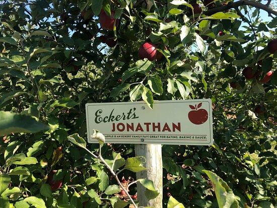 Eckert's Grafton Farm