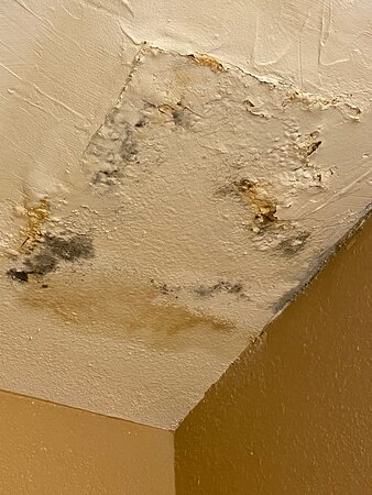 Patched ceiling where water dripped from the shower in the room above.