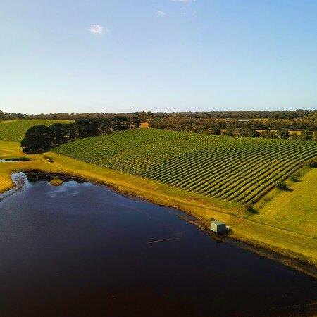 Bellbrae Estate back vineyard and reservoir.