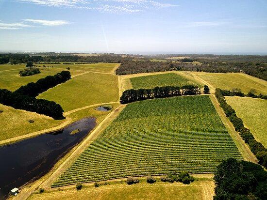 back vineyards
