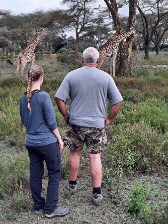 1 Day Lake Nakuru: Some Giraffes at lake Naivasha-Mara