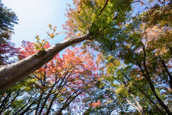 温泉寺 - 諏訪市、上諏訪温泉 しんゆの写真 - トリップアドバイザー
