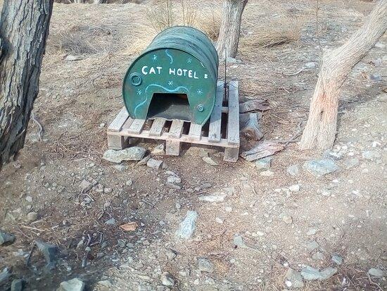 Τήνος, Ελλάδα: Local kitty hotel