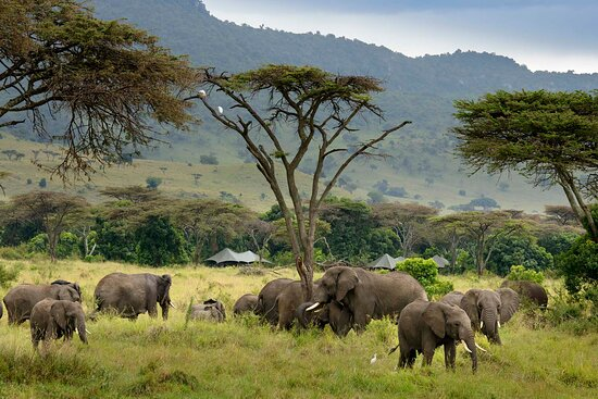 Angama Safari Camp is situated in the heart of the action