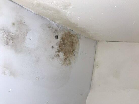 Damp patch in my room
