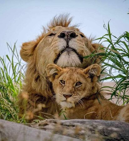 Tanzania: Instyle Africa Safaris
