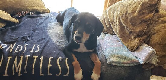 Owner's dog, Bo, is so sweet!