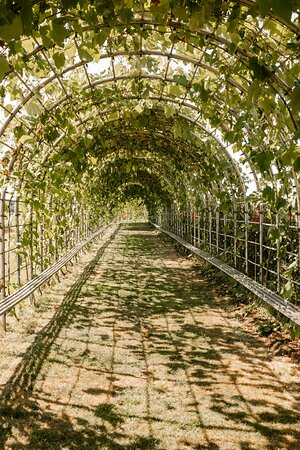 50 Metre GrapevineTtunnel. Perfect for picnics, receptions, birthdays, bridal parties, and more!
