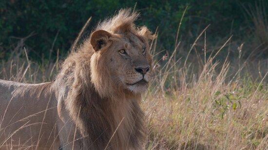 1 Day Lake Nakuru: Lion in the Mara