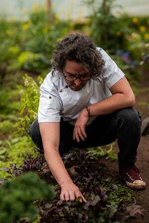 Cosechando productos organicos y saludables de la mano de nuestro chef Felipe