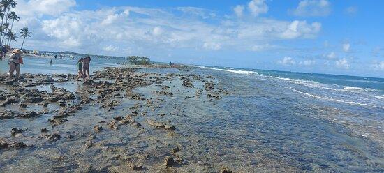 Caminha nos recifes