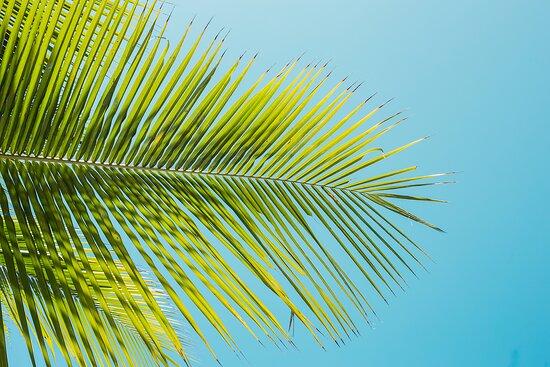 Coqueiro de Itapuã
