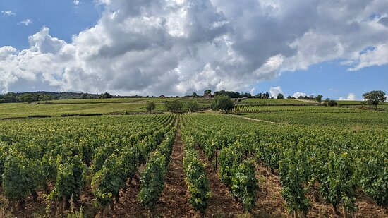Private excursion to Côte de Beaune and Côte de Nuits (full day): It doesn't get much prettier than this!