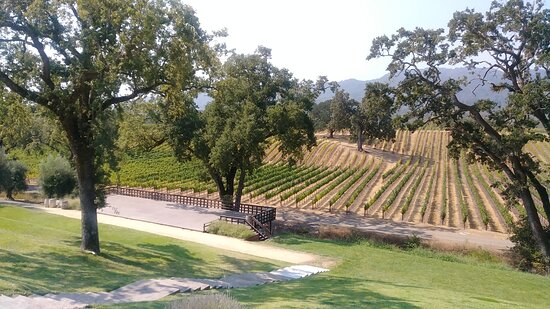Sonoma Valley Wine Trolley Including Lunch: View of some of the BR Cohn vineyards