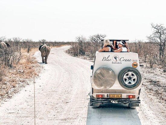 Bluecrane Safaris Namibia