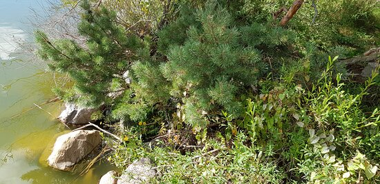 Национальный парк «Куршская коса», 2 сентября 2021 года