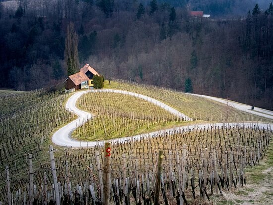 One-day private transfers to the heart of the vineyards. From Ljubljana to Spicnik and back.
