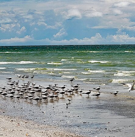 Cape Romano Shelling and Sightseeing Boat Tour from Marco Island: Sea birds
