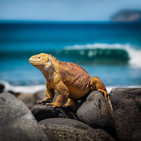 갈라파고스 섬 사진
