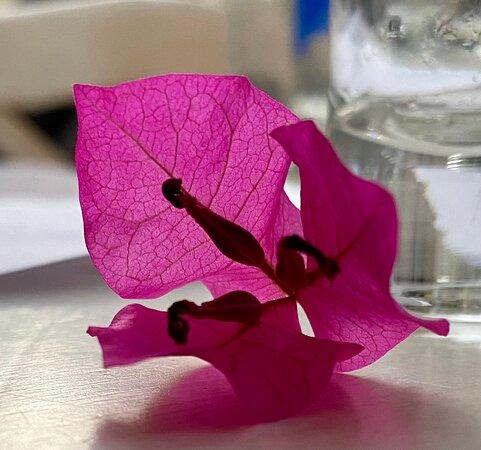 Charmigt när hibiscusen smyckar bordet