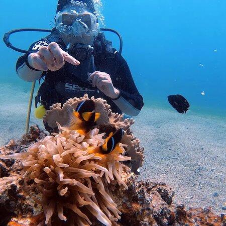 سعادةٌ لا توصف مع فريق Aqaba Pro Divers