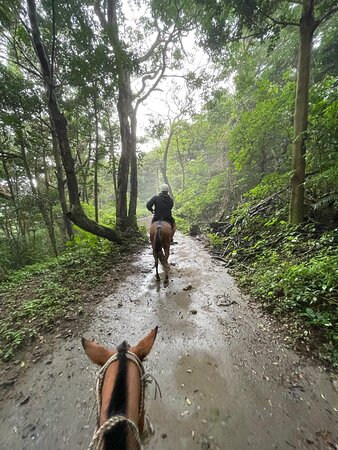 Horseback riding through the jungle