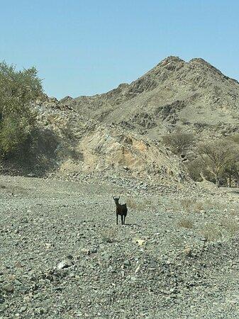 Wadi travels.