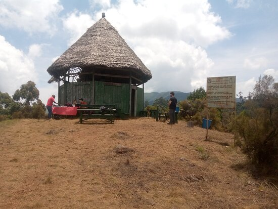 Tanzania: Day trekking to magamba nature forest reserve