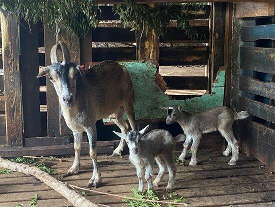 Two newborns!