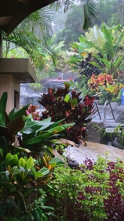 Arenal Volcano Rainforest Walk and Hot Springs 사진