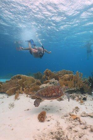 Double Dip Snorkel Trip: <3
