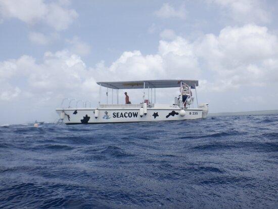 Double Dip Snorkel Trip: De boot!